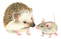 hedgehog_n_mouse_Kopie.png