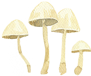 mushrooms_Kopie.png